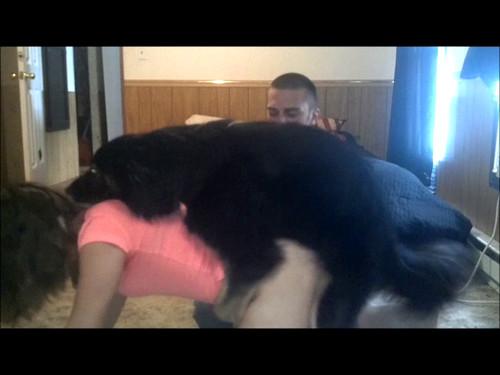 Dog give blow job mp4 consider
